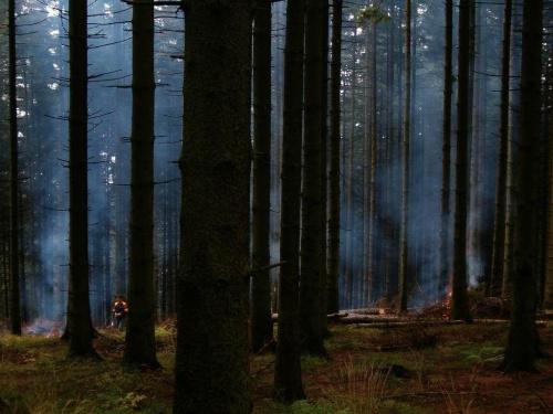 Beskid Śląski; pod Równicą; tak wygląda obecność człowieka w lesie... #góry #Beskidy #Śląski #szlak #Równica #człowiek
