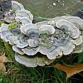 Kolorowy grzyb. #grzyb #jesień #OgródDendrologiczny #przyroda
