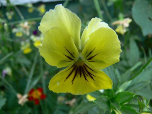 Nie wiem jak się nazywa #kwiaty