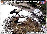 http://images27.fotosik.pl/14/e8d17099891c0b0em.jpg