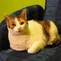 """Zdjęcie na wstęp do cyklu - """"Mikusia gryzie długopis"""" :) #kot #koty #śmieszne #długopis #miki #mikusia"""