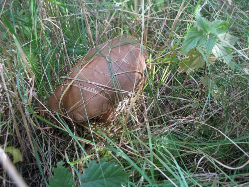 #grzybyu #las #jesień #przyroda