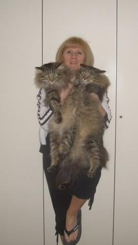 Ponad 12 kg w ręku .. Moje tygryski GG