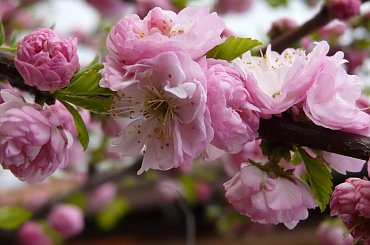 Natura #kwiatek #natura #wiosna