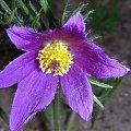#botanika #fiolet #FioletowyKwiat #kwiat #KwiatWOgrodzie #kwiatek #KwiatekWOgrodzie #ŁadnyKwiat #ogród #OgródBotanicznyPowsin #Powsin #KwiatWOgrodzieBotanicznym #kwiaty #KwiatWPowsinie #PowsińskiOgródBotaniczny #fioletowy #KolorFioletowy