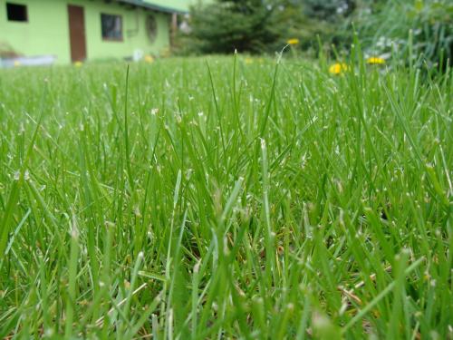 Roślinki prosto z ogródka #ogród #rośliny #trawa