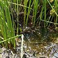 Bagno #bagno #przyroda #rośliny #błoto #woda