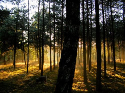 iść w stronę słońca ... #las #świt