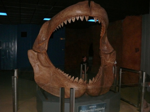 Szczęka Megalodona - prehistorycznego rekina #Marineland