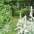 ścieżka #ogród #kwiatki #ścieżka