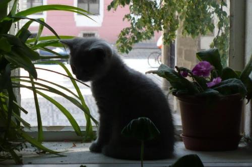""" Kocia melancholia"" #zwierzeta #kot"