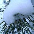 gałązka w niegu #zima #mróz #snieg #śnieg #listopad #zaspy #macro #drzewa #przyroda #natura #gałęzie #szron #zimno #biel