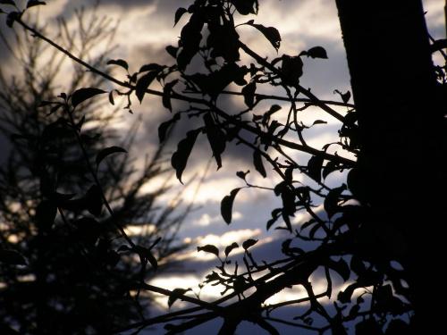 Drzewo na tle nieba. #drzewo #niebo #cień