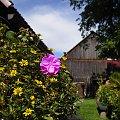 Fajnie wyszło :) takie coś mam koło domu :D #kwiatek #dom #natura #mudulinek
