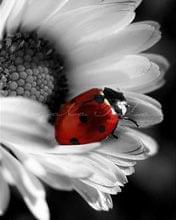 http://images27.fotosik.pl/321/54b6e52ad24fb05d.jpg