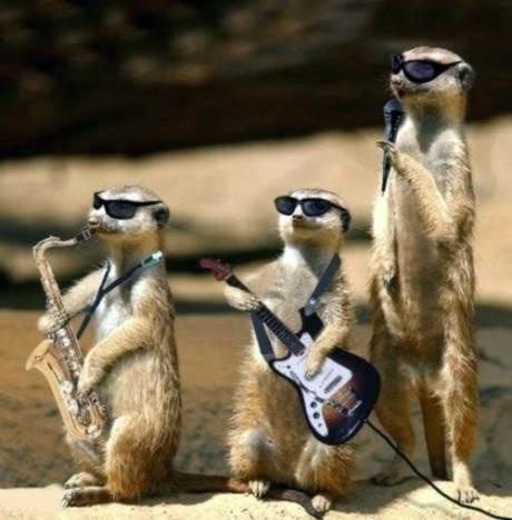 #orkiestra