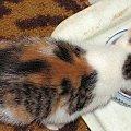 trimalutka i jej siostra tygryska z płomykami rudymi szukaja domu