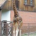 #żyrafa #zwierzęta #zoo