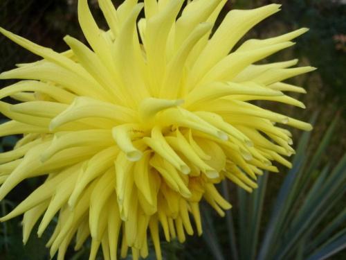 kwiat #KwiatyRoślinaŻółty