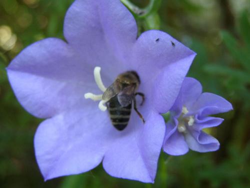 #owady #zwierzęta #natura #osa #kwiaty